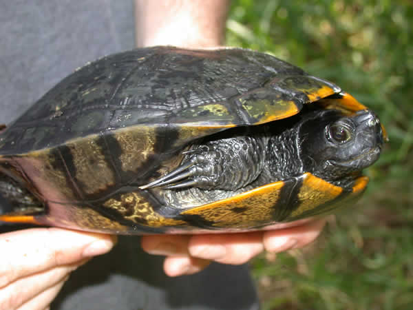 Feeding Baby Turtles : food animal items. When vegetables such as seeds or leaves. If you ...
