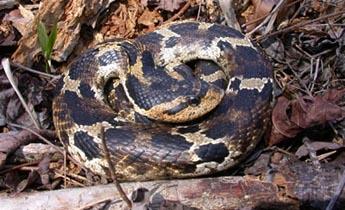 species photo